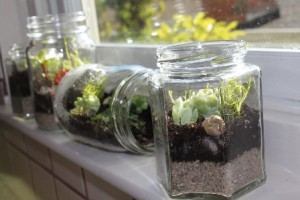 Lets Make a Terrarium